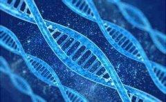 成都DNA亲子鉴定的方法你们知道有哪些?