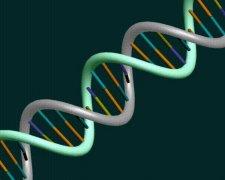 DNA亲子鉴定的真相只有一