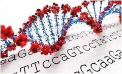DNA的亲子鉴定的准确率有